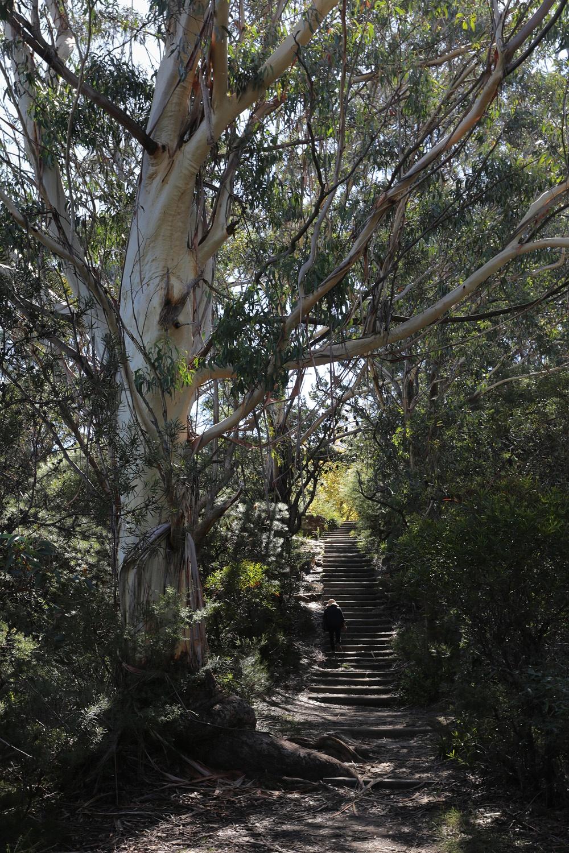treestair