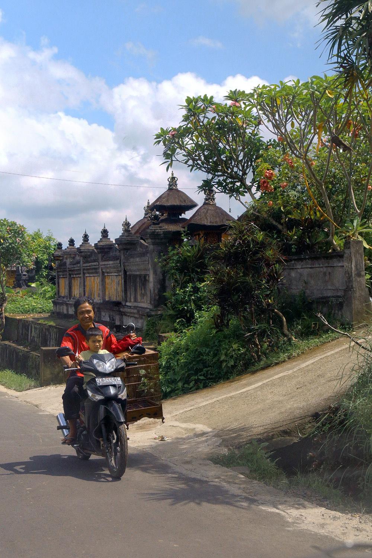 motorbikecage