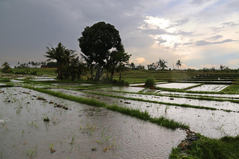 rainfields