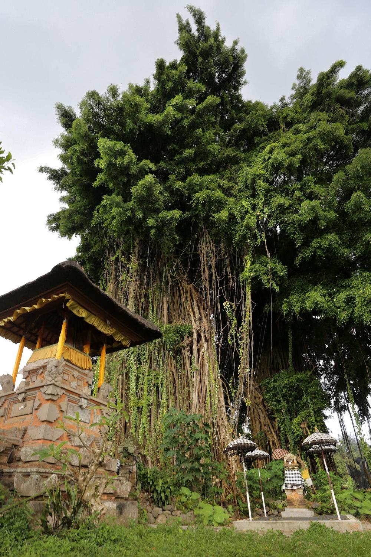 sacredtree
