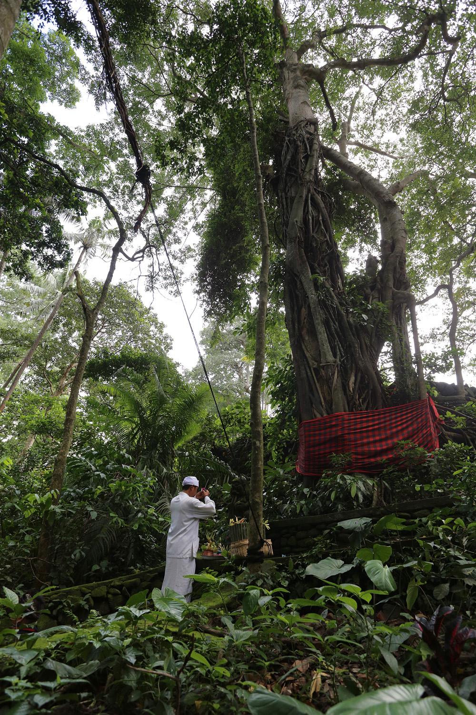 treeprayer