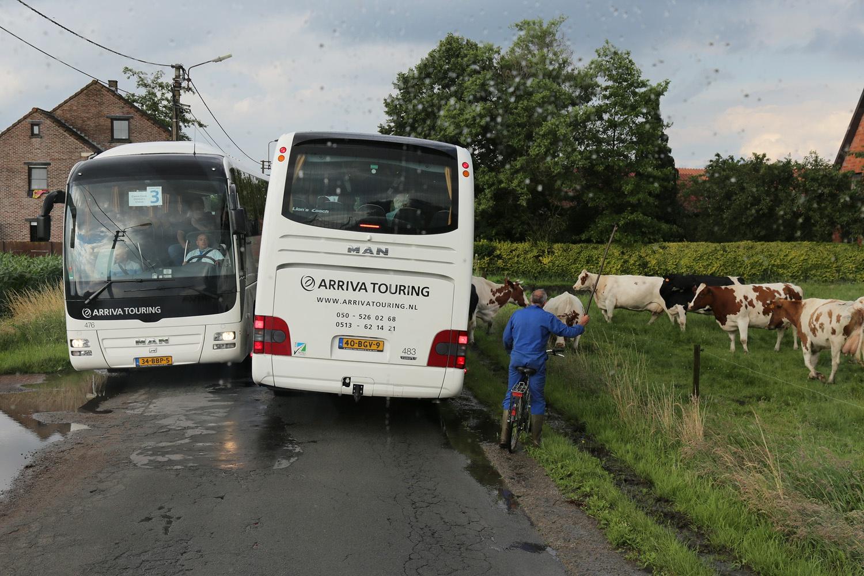 e16-cowproblems