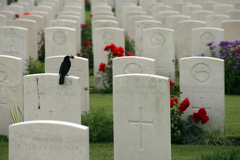 tombstonebird