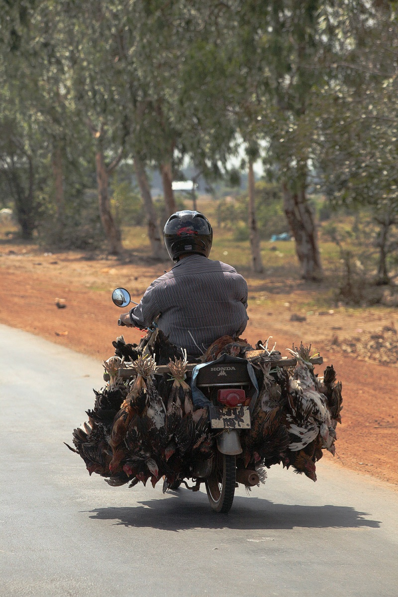 fowltransport
