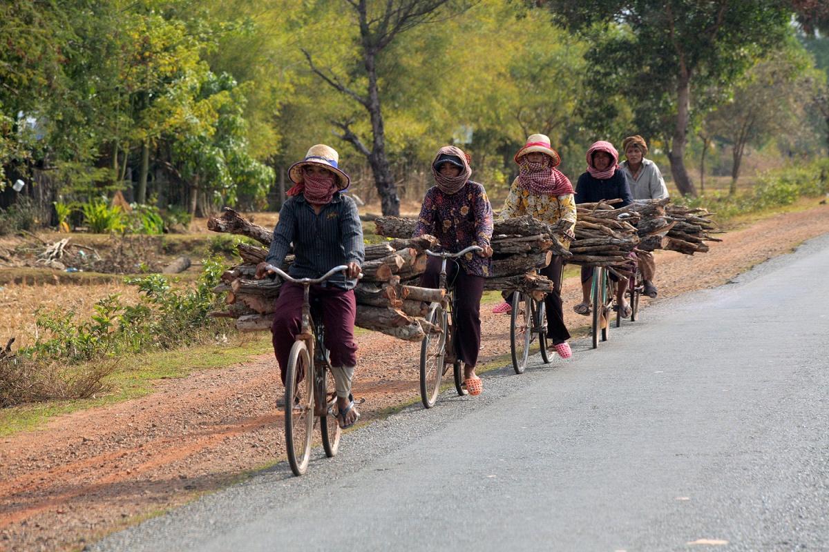 kilnwood Firewood for the Kilns, North of Phnom Penh, Cambodia, 2010