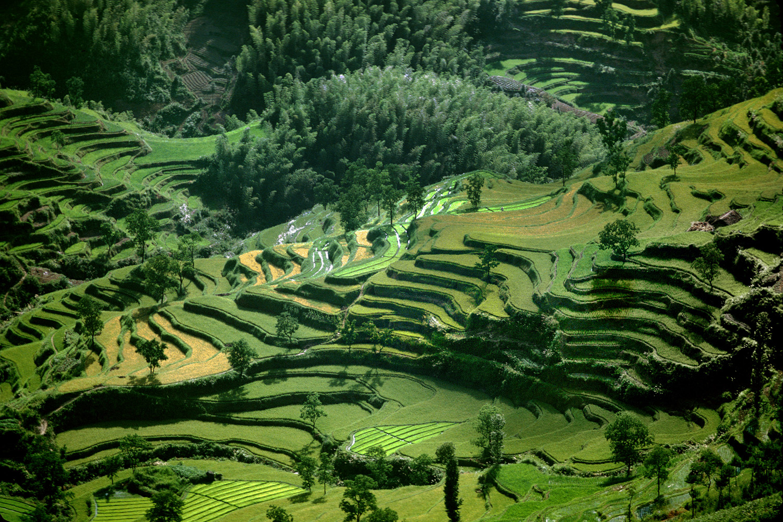 81-riceterraces
