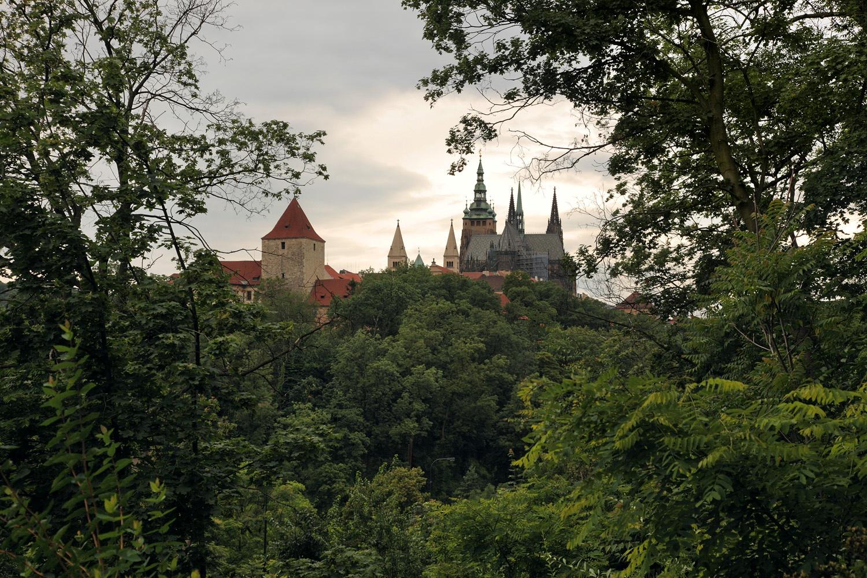 castelforest
