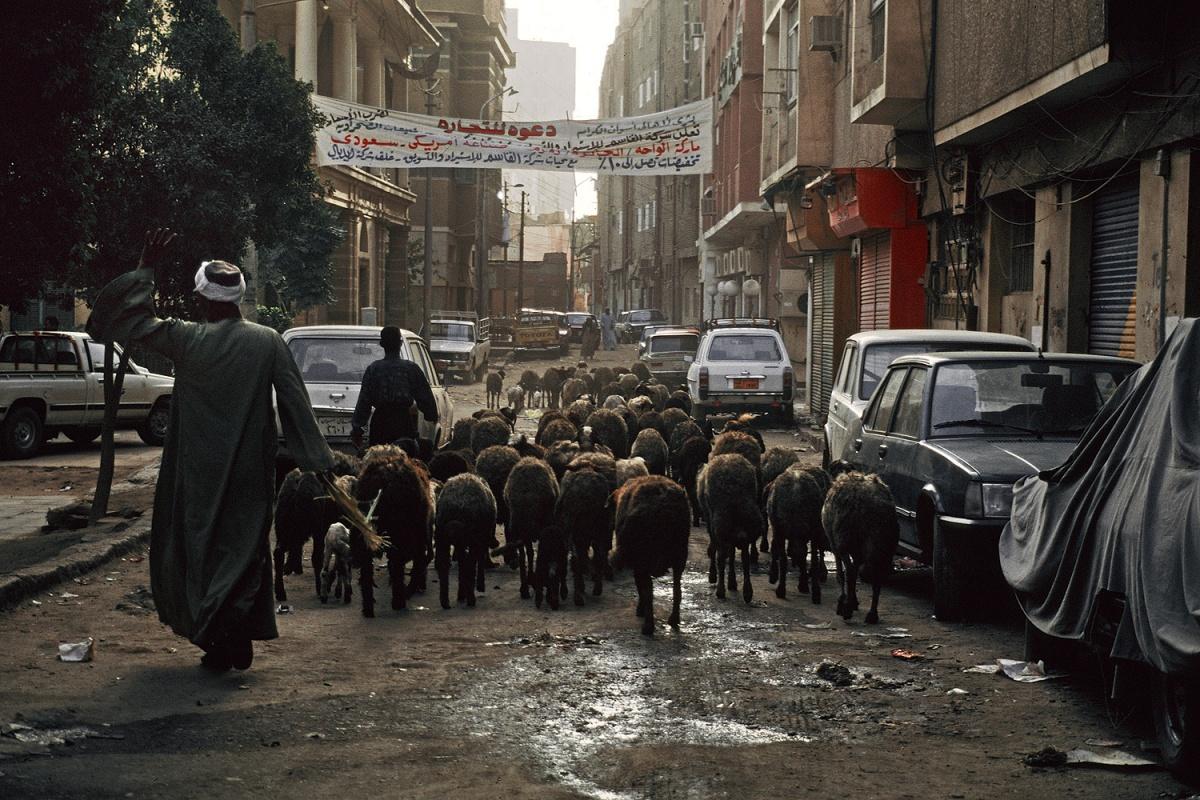 sheepstreet