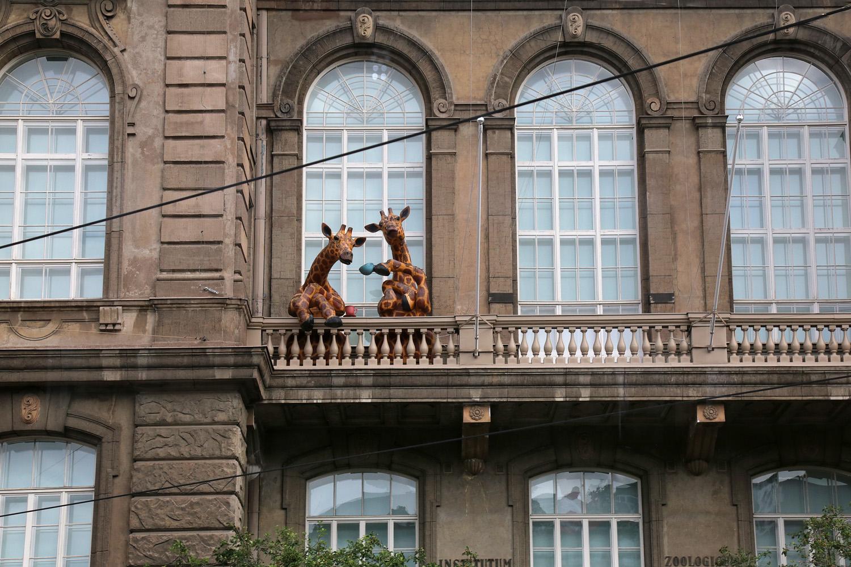 19-zoologicalinstitute