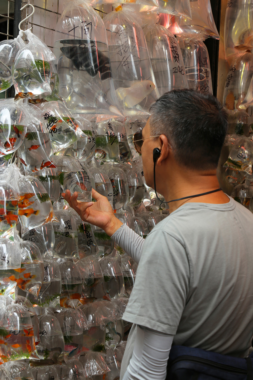 17-fishstoreC Goldfish Market,  Mong Kok,  Kowloon, Hong Kong, 2017