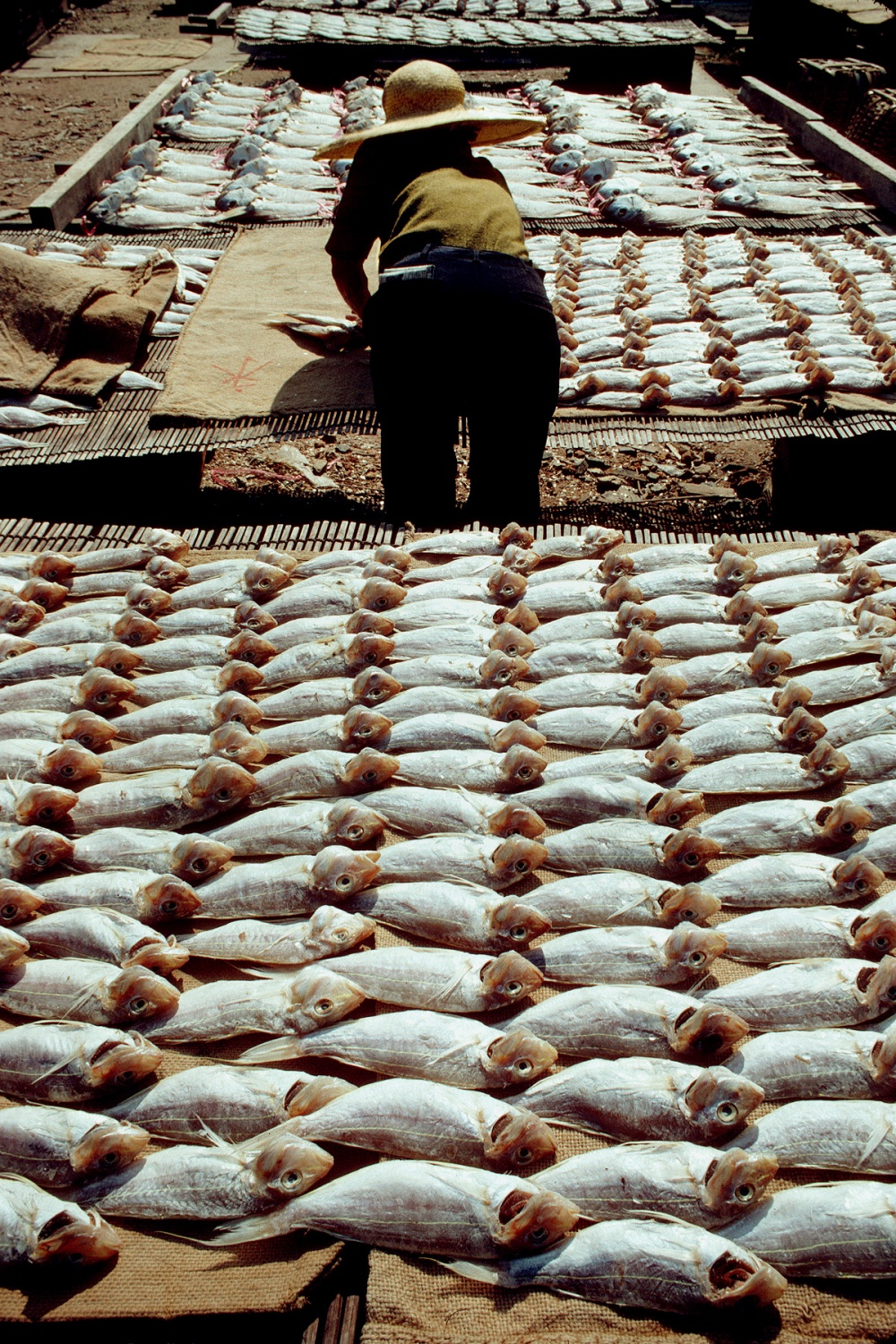 fishdrying Aberdeen, Hong Kong, 1979