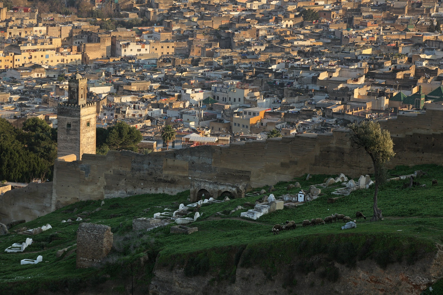 citywall From the Merenid Tombs,  Fes el Bali, Morocco, 2013