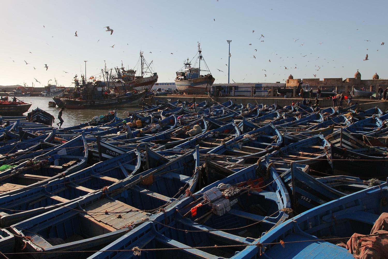 manyboats