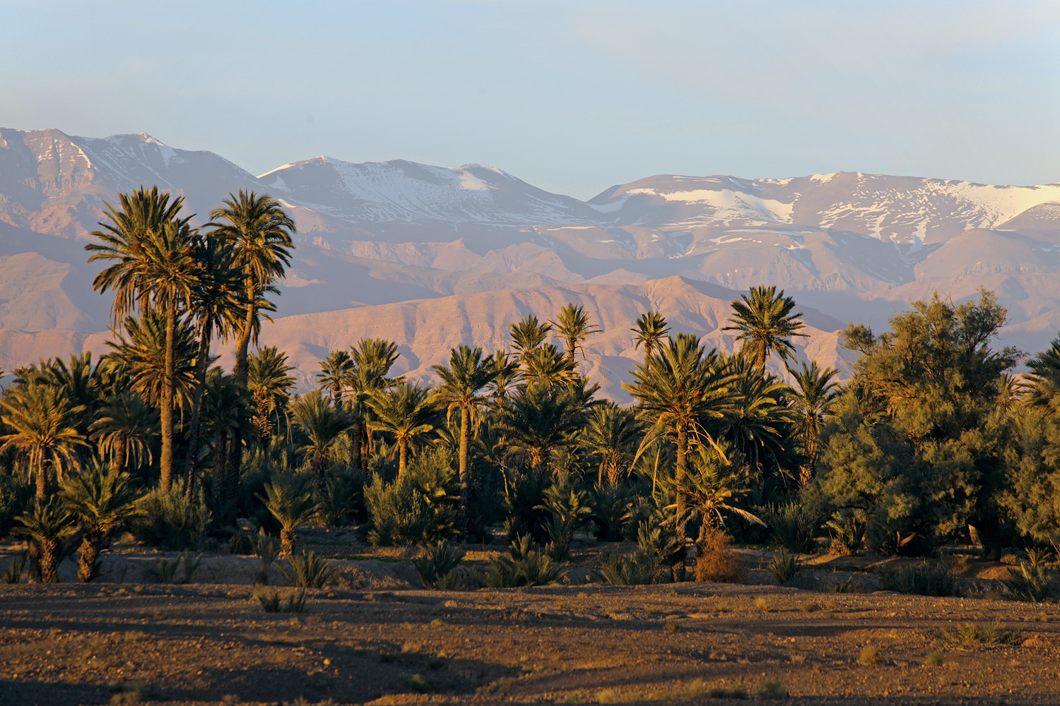 palmmountains Dades Valley, 