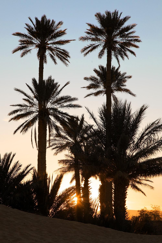 palmsunset
