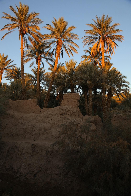 zagorapalms Zagora, Morocco, 2013