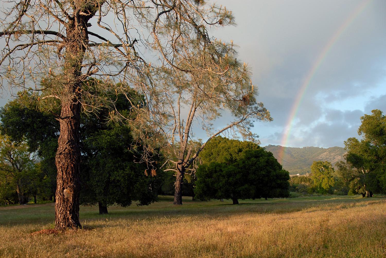 07-rainbowpines