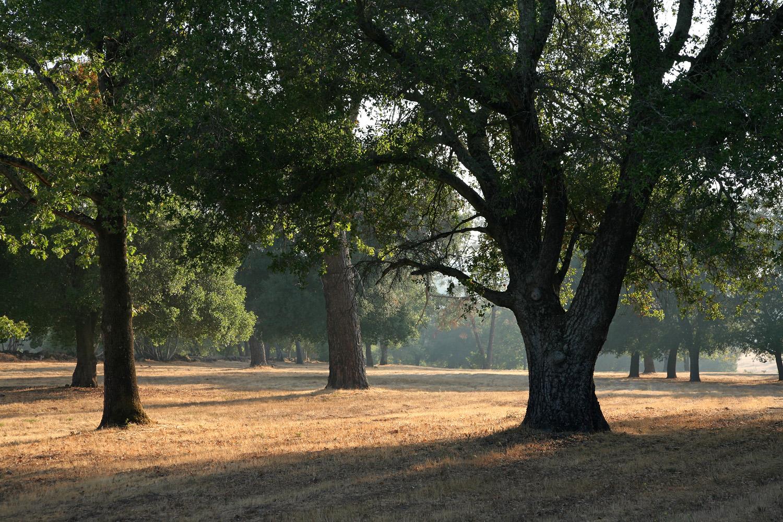 08-oakmeadows Twin Brook Farm,  Napa, California, 2008