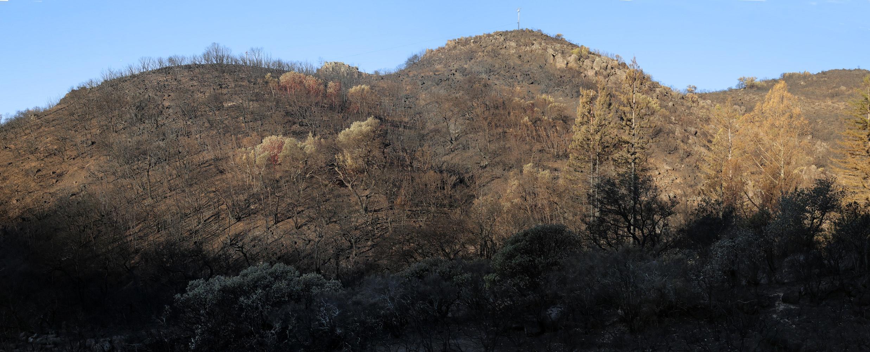 17-firescapeF After the fire,  Soda Canyon Road,  Napa, California, 2017