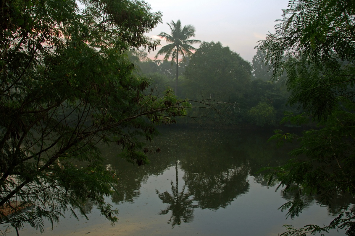 farmpond Farm Pond, 