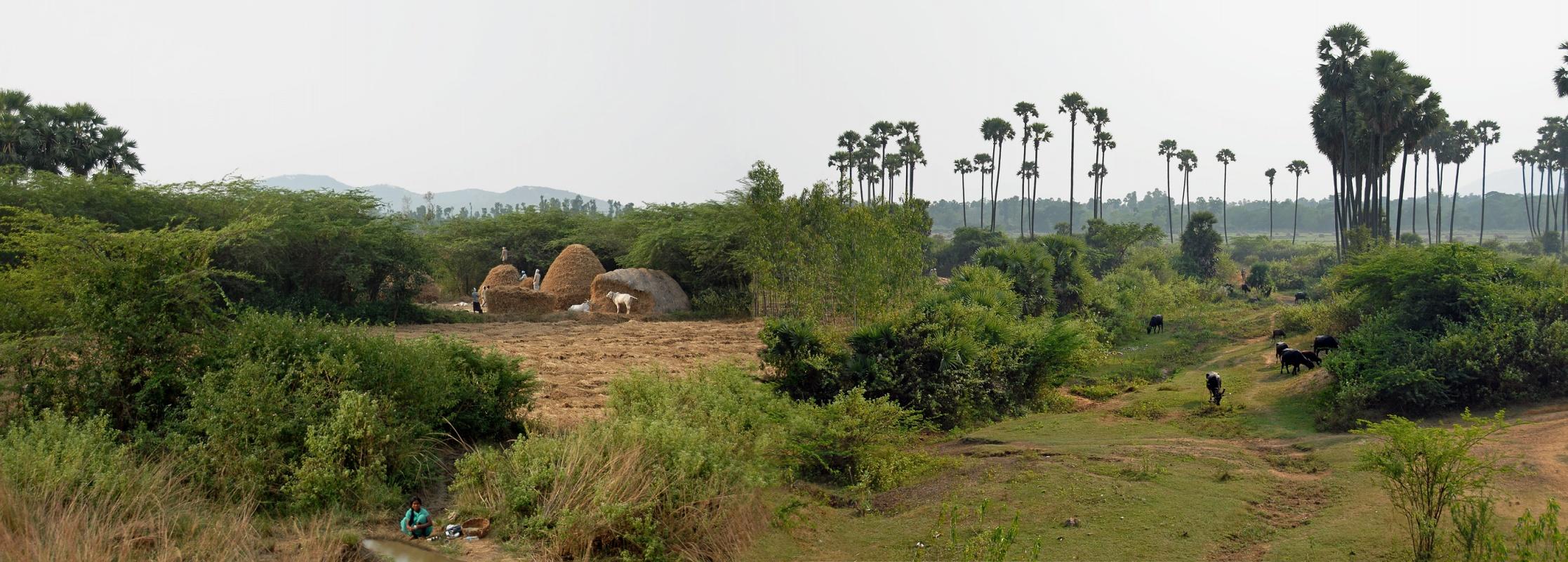 orissascape Panorama From the Train,  Andhra Pradesh, India, 2007