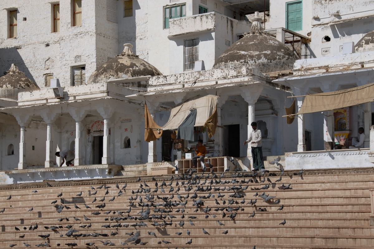 pigeonsteps