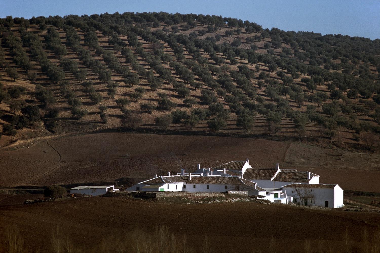 olivefarm