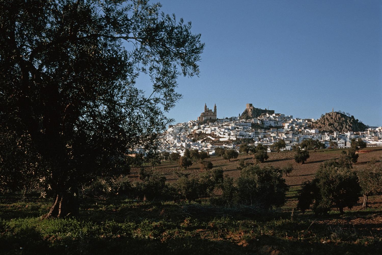 oliveraolives