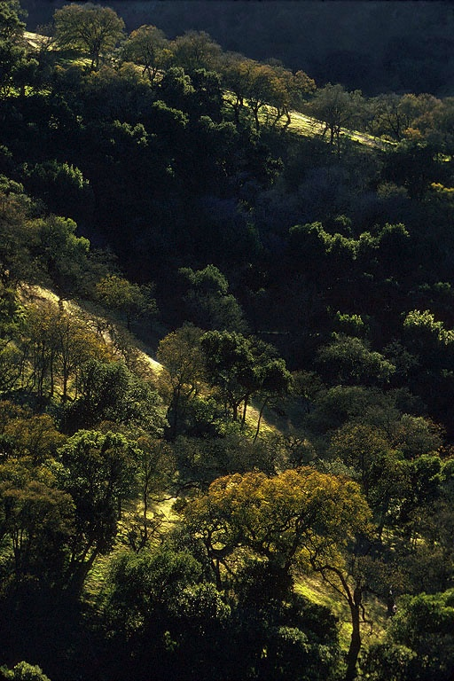 hillside Near Port Costa, California, 1975